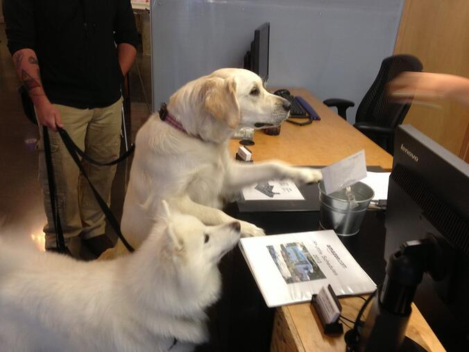 dogs_at_amazon