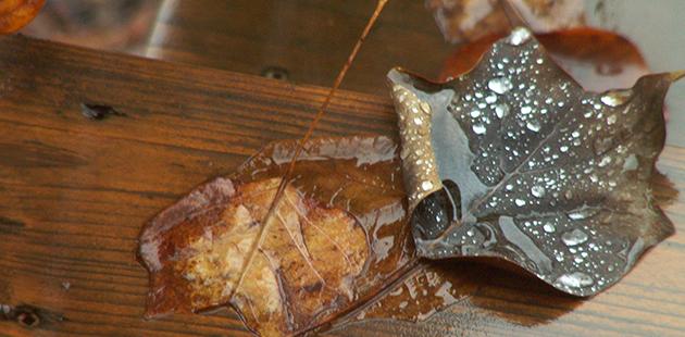 Wet_Fallen_Autumn_Leaves-1