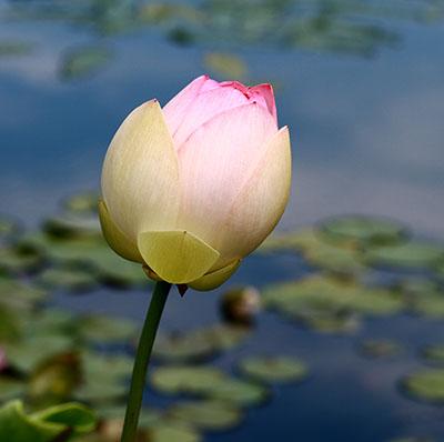bbg_flower